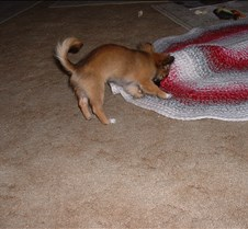 puppy picts 9-21-03 059