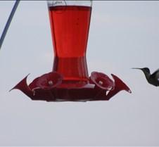 hummingbird3sign