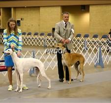 Sweeps_12-18_Dogs_9791