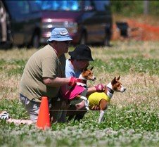 Basenji_7_July_Run1_Course2_3686CR