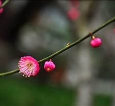meihua_20160129_0042