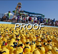 082513_ducks_03