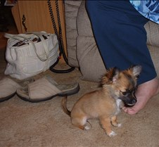 puppy picts 9-21-03 024