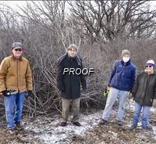 volunteers removing buckthorn