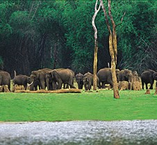 Periyar Wild life Sanctuary, Thekkady