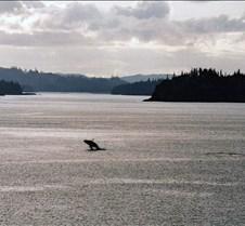 Humpback Near Juneau