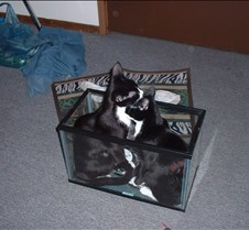 kitty picts dec 03 007
