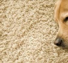 dog-carpet1