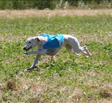 Whippets_8July_Run1_Course7_0298CR