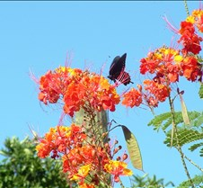 Tucson butterfly lazy K 4