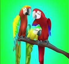 3-parrots