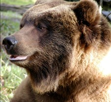013004 Kodiak Female 130