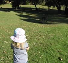 Nieta conviviendo con kangooros
