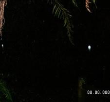Glowworm 2