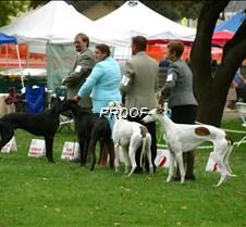 Winners_12-18_Puppy_Sweeps_Dogs_3510