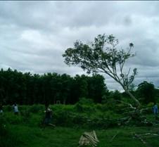 096 timber