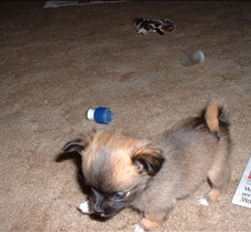 Puppy Picts 059