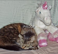 Cat with Unicorn Doll