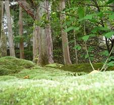 Mossy Floor
