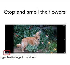 Flowers & Animals Animals smelling the flowers