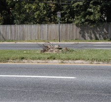 Median tree destroyed