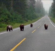 Bears in the Road