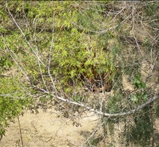 Wild Animal Park 03-09 099