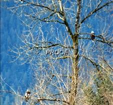 eagletree-11