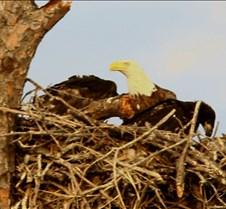 Eagle's Nest in Punta Gorda 1