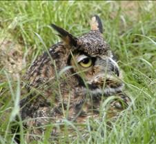 Wildlife Images #55