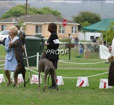 Winners_9-12PuppyDogs_2587