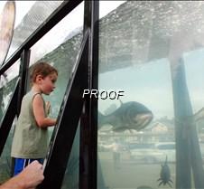 Boy at fishtank