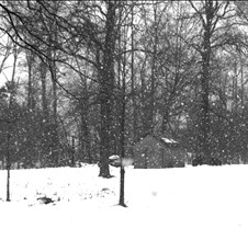 snowfallbw
