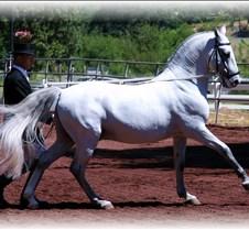 long rein