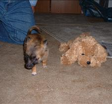 puppy picts 9-21-03 009