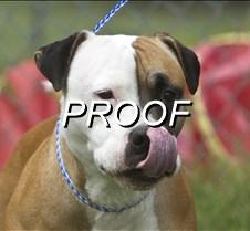 072214_PetOfWeek_Dog