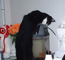 kitty picts dec 03 010