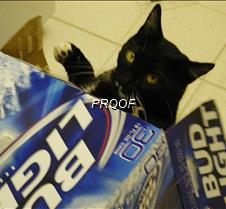 Keep your paws off my beer!