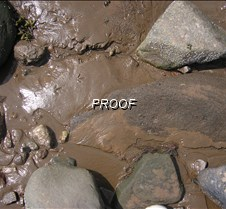 Bird feet tracks in the mud at low tide