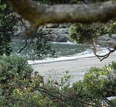NZ Bush, Sand and Sea