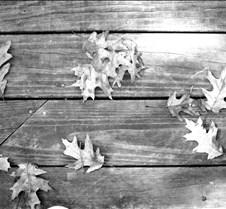 leavesonwoodbw