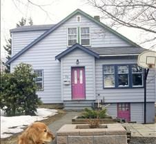 Golden Labrador @ Crown Drive House