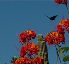 Tucson Lazy K butterfly 1