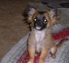 puppy picts 9-21-03 050