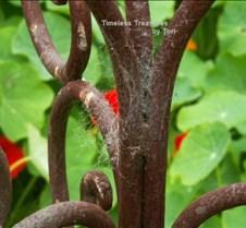 rusty web