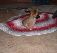 puppy picts 9-21-03 062