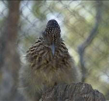 Wild Animal Park 03-09 077