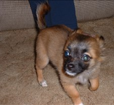puppy picts 9-21-03 018