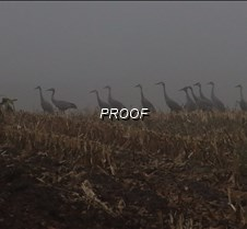 cranes BW see lou
